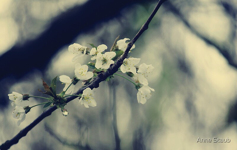 Focus on Spring by © Anne Staub