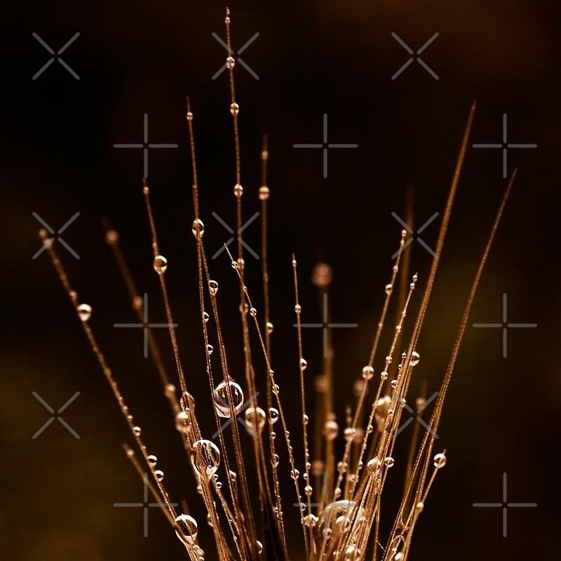 honey rain by © Ingz