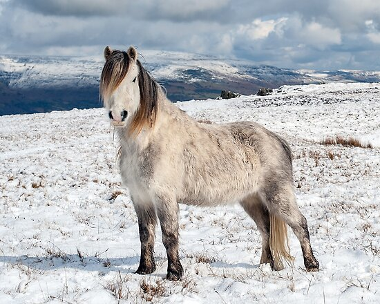 realistic horse breeds # 20