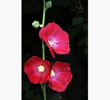 Beerenberg Bloom Photographic Print by Stephen Mitchell