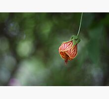 Baby Triffid Photographic Print by Stephen Mitchell