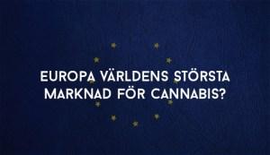 Europa världens största marknad för cannabis