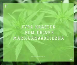 Fyra krafter som driver marijuanaaktierna