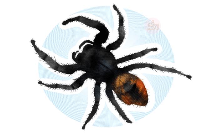 Загадки про паука для детей