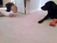 Малышка впервые ползает. И ползет она к своему любимому и верному другу