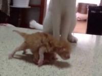 Эта кошка-мать, похоже, знает секрет воспитания