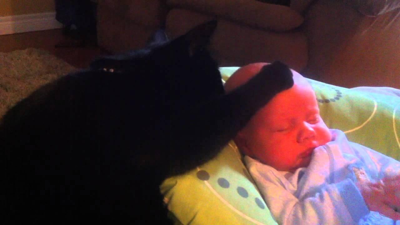 Кот-нянька. Посмотрите как он успокаивает малыша