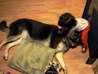 Кроха засыпает возле своего пса