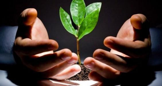 Не игнорируйте ребенка. Эксперимент с растениями можно применить и к детям.