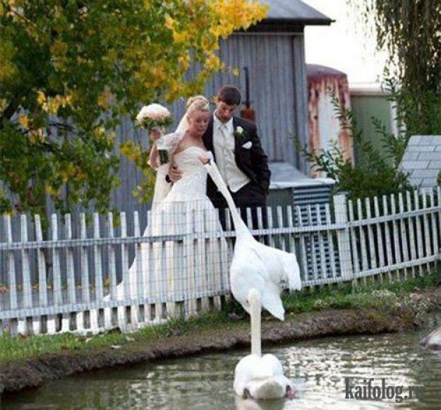 свадебные фотоприколы18