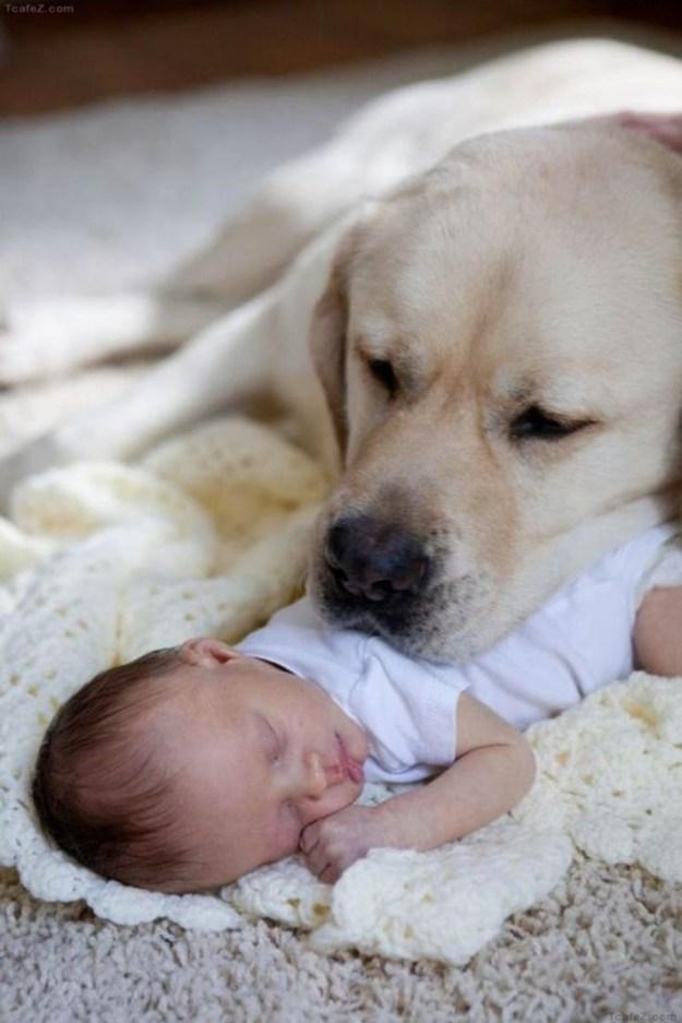 дети с животными