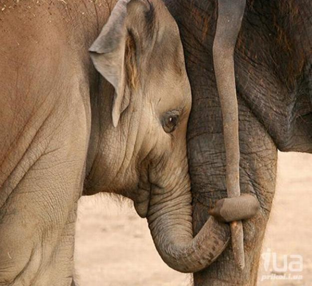 животные мамы 7