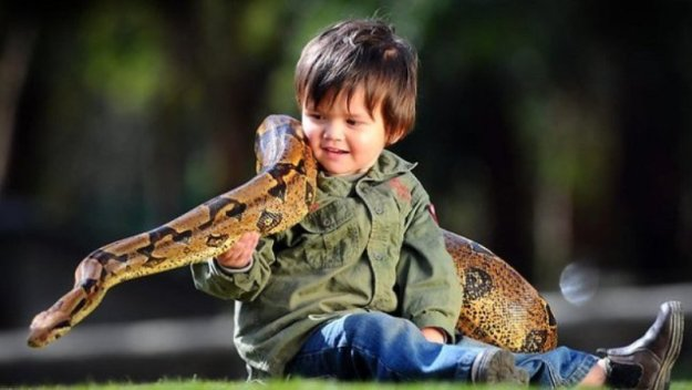 мальчик из Австралии играет с удавом