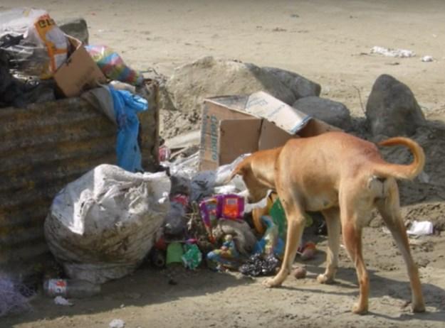 собака спасла жизнь ребенку6