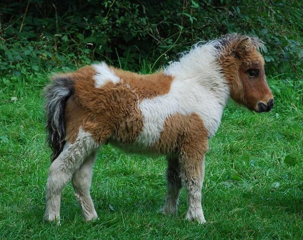 Сказка о маленьком пони