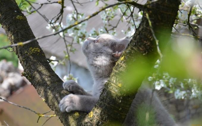 кот весной