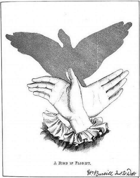 тень птица