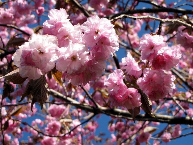 Поразглядывать цветущие деревья и взять домой веточку