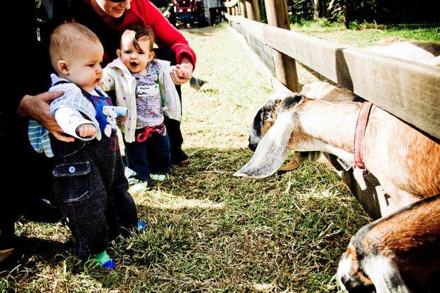 Съездить на загородную ферму или в большой зоопарк