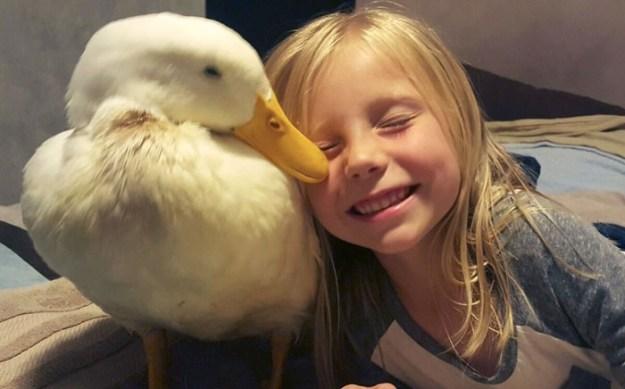 девочка и утка