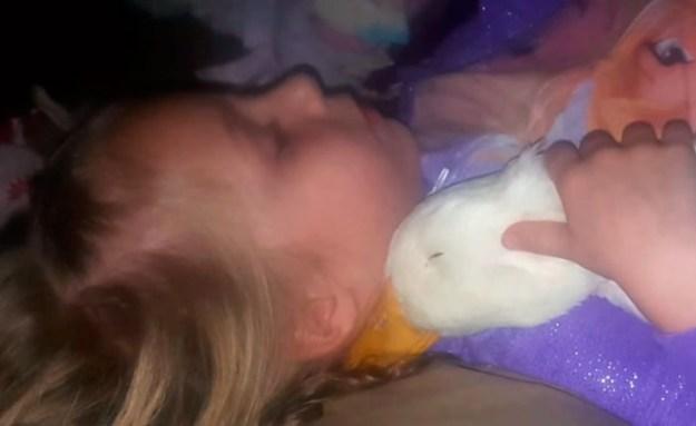 птица и девочка