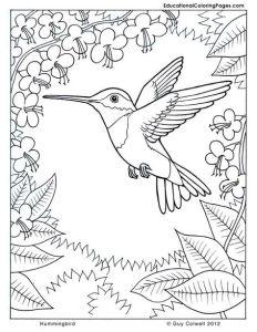 Антистресс птица