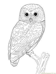 Раскраски для взрослых совы