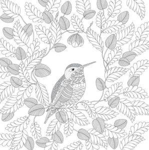 колибри раскраска