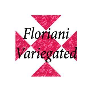 Floriani Variegated Thread Rayon