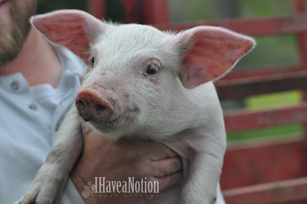 Piggie Ann