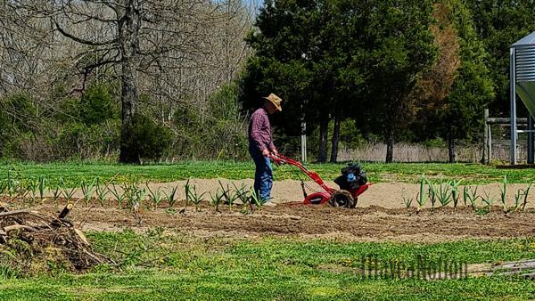 Rototilling the garden