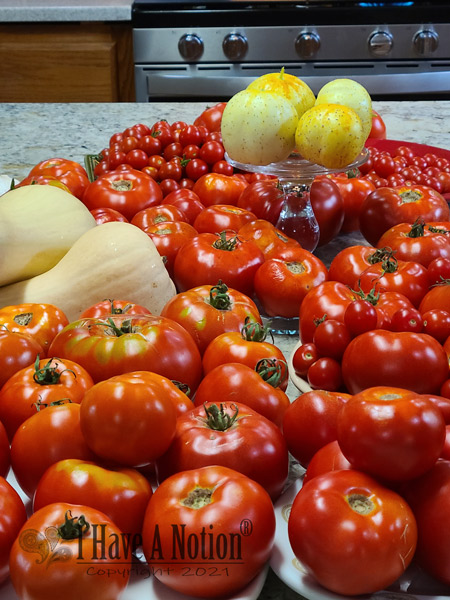 4 days of tomato harvest