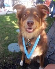October 2013: Zeke pretends to run the OctobeRun half marathon in Redwood City