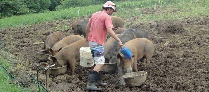 livestock farms IBD connection