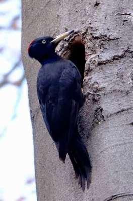 Vogelabwehr-specht