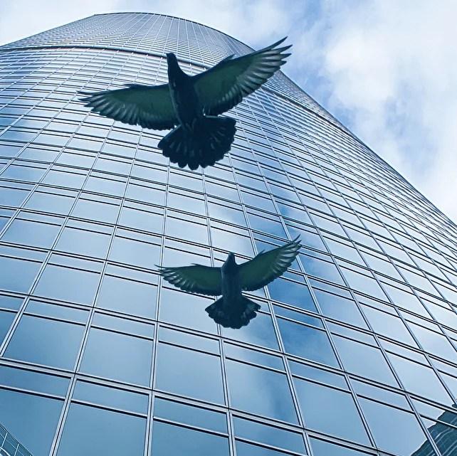 Bürogebäude vor Vögel wie Tauben schützen