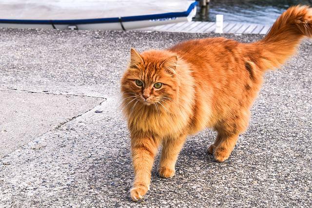 cat-1342923_640