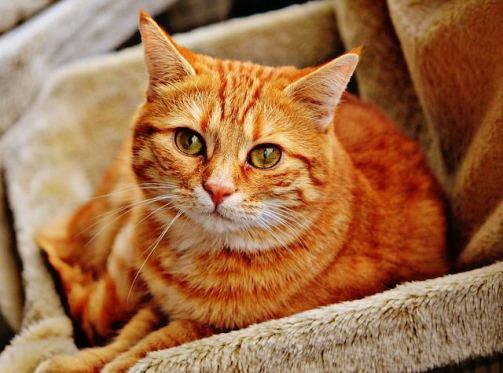 Резултат со слика за Tabby Cats