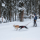 Skijoring With Your Canine Is The Winter Sport You By no means Knew You Liked