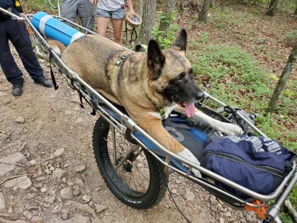 Akita Brought to Safety