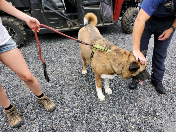 Akita Rescued From Heat