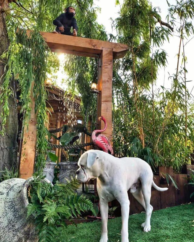White Boxer Tropical Paradise