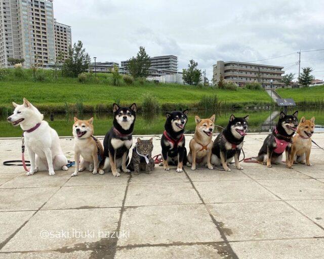 Shiba group