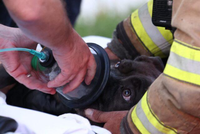 Dog Oxygen Mask