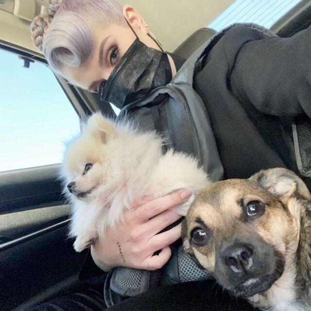 Kelly Osbourne Dogs