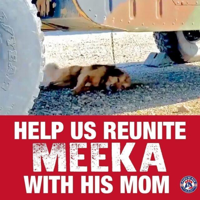 Meeka fundraiser