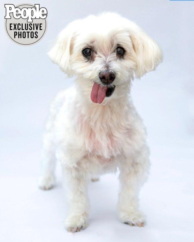Cutest Rescue Dog
