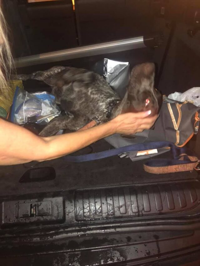 Dog in stolen car