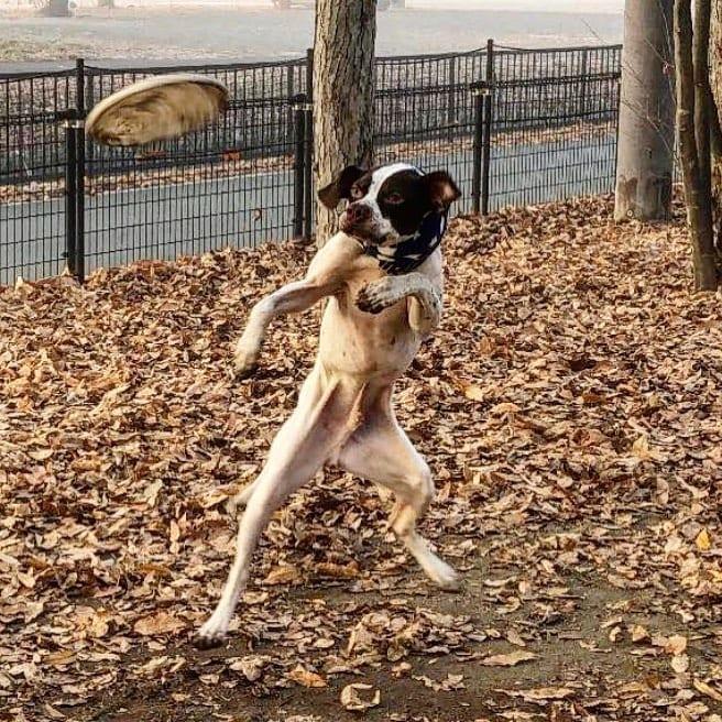 Unflattering Frisbee Dog