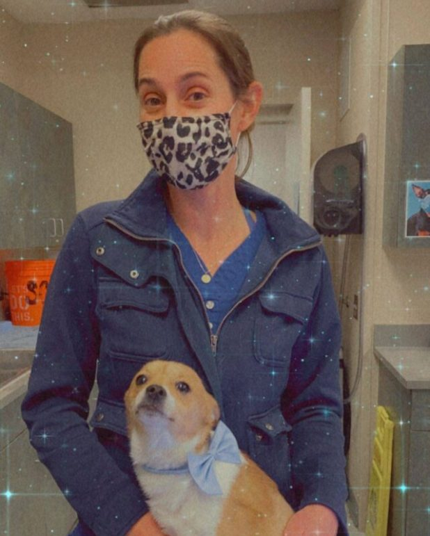 Chihuahua Amputee and Life-saving vet